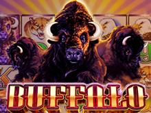 Игровой слот Buffalo